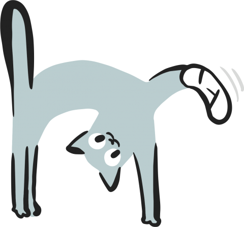 illustratie-kat